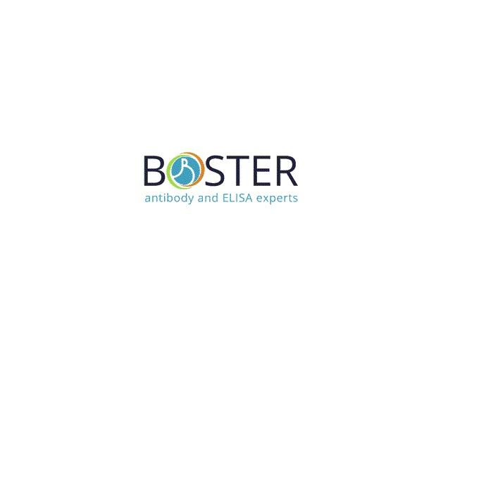 Boster Biological Technology