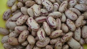 SUGAR BEANS FOR SALE