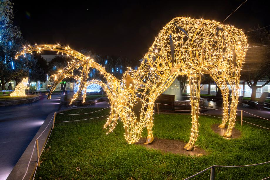 Joburg Zoo Festival of lights and night market: A treat for all