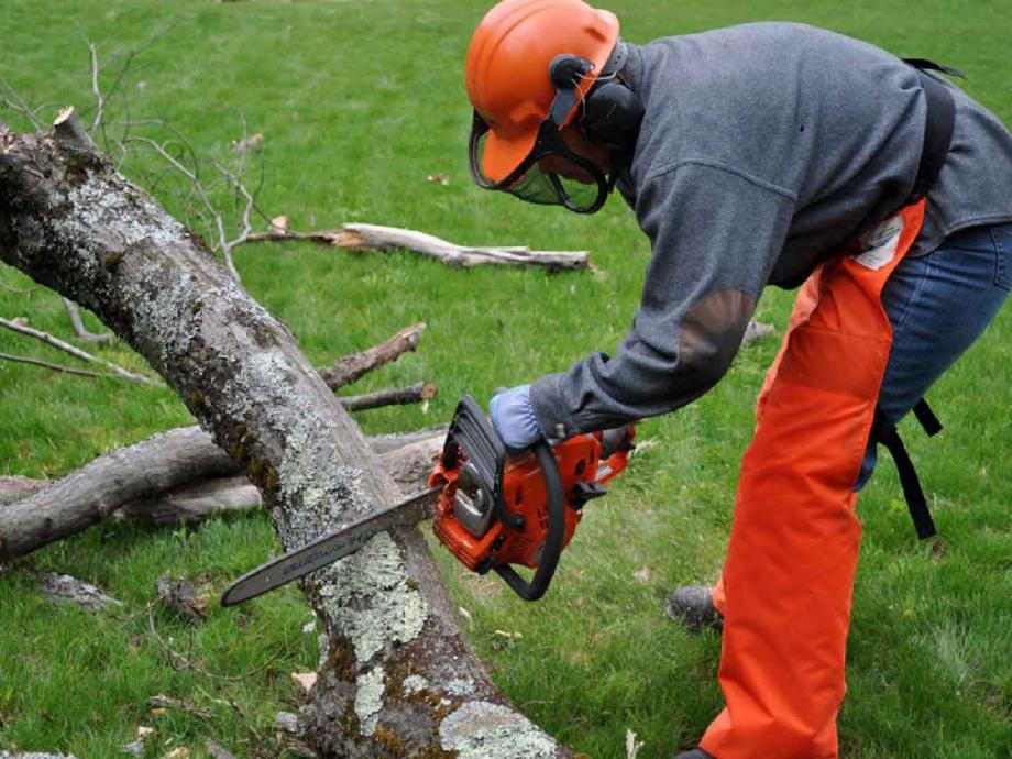 Tree Felling & Stump Removal Service